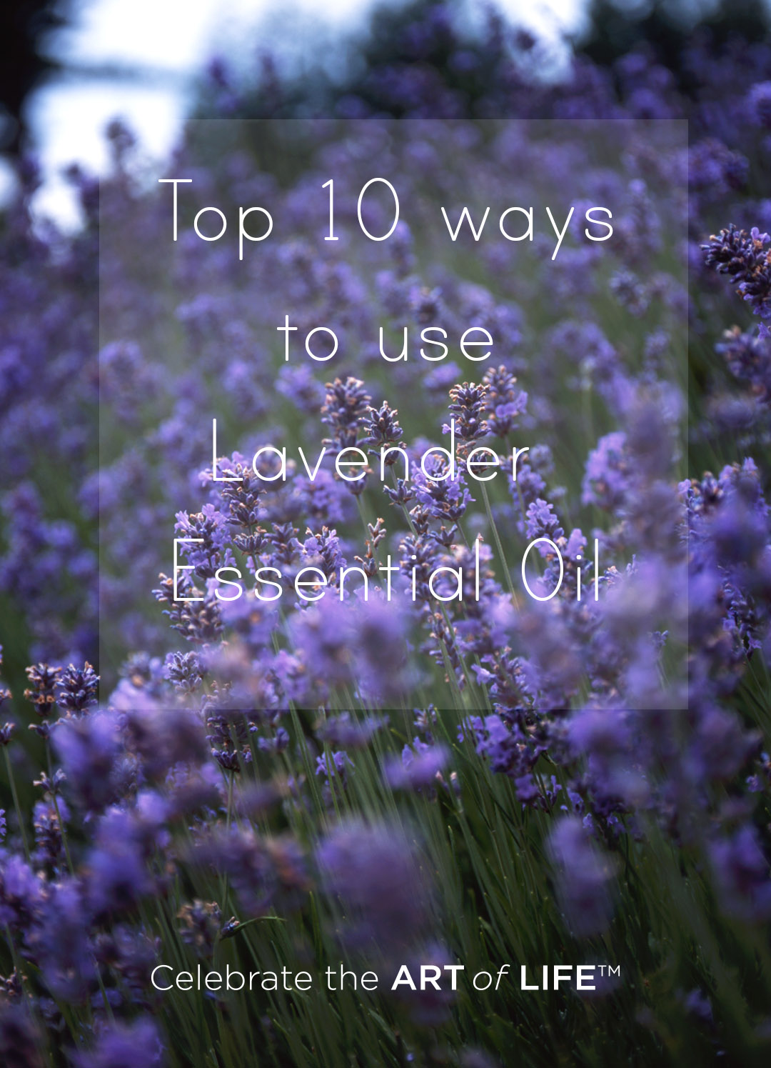 top ten ways to use doTERRA lavender essential oil