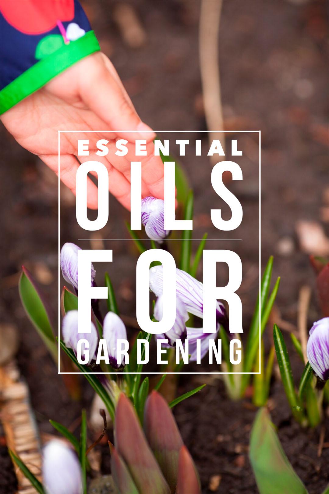 doTERRA essential oils in the garden